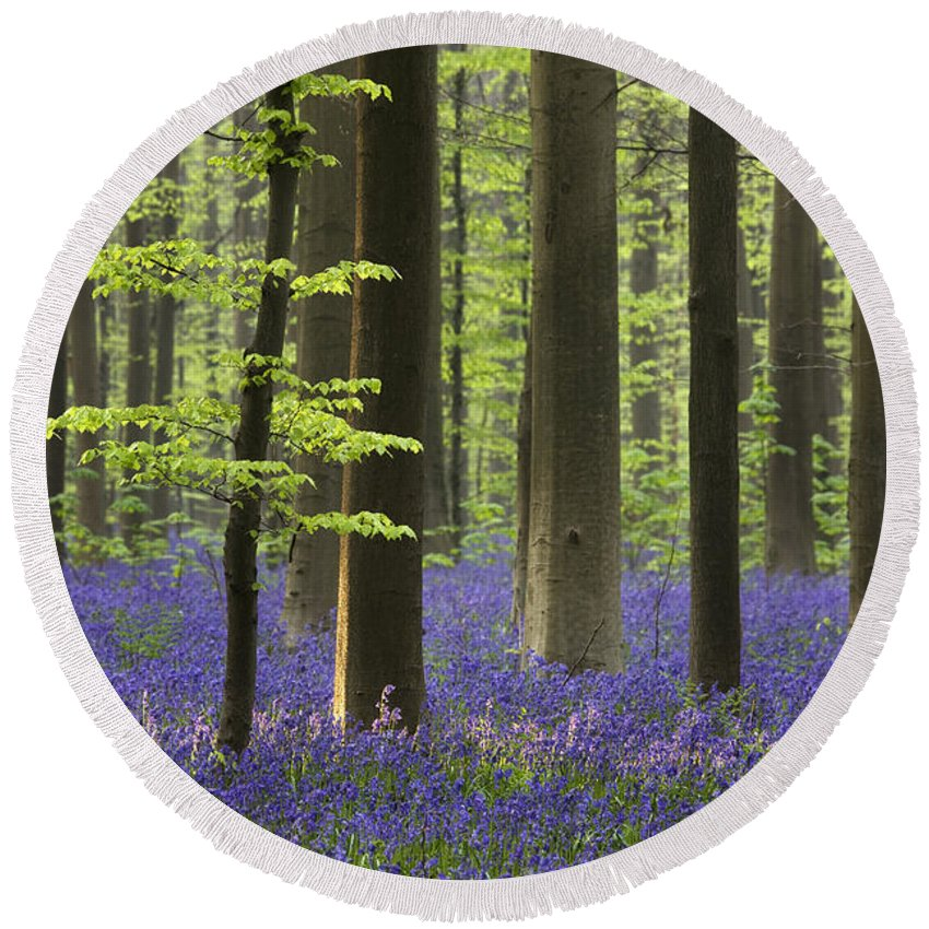 Bluebells Round Beach Towel featuring the photograph 110506p243 by Arterra Picture Library