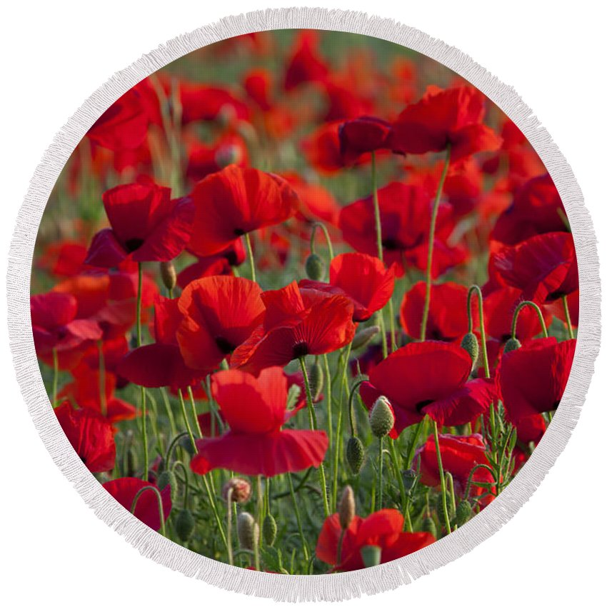 Papaver Rhoeas Round Beach Towel featuring the photograph 111216p031 by Arterra Picture Library