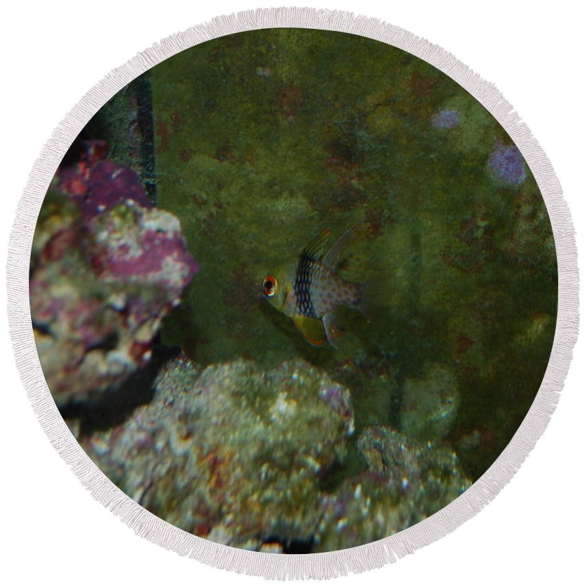 Taken Through Side Of Aquarium Round Beach Towel featuring the photograph Tropical Fish by Robert Floyd
