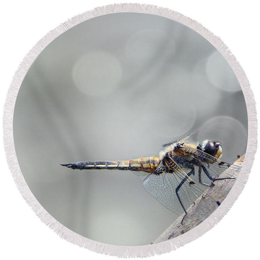 Dragonfly Round Beach Towel featuring the photograph Dragonfly by Heike Hultsch