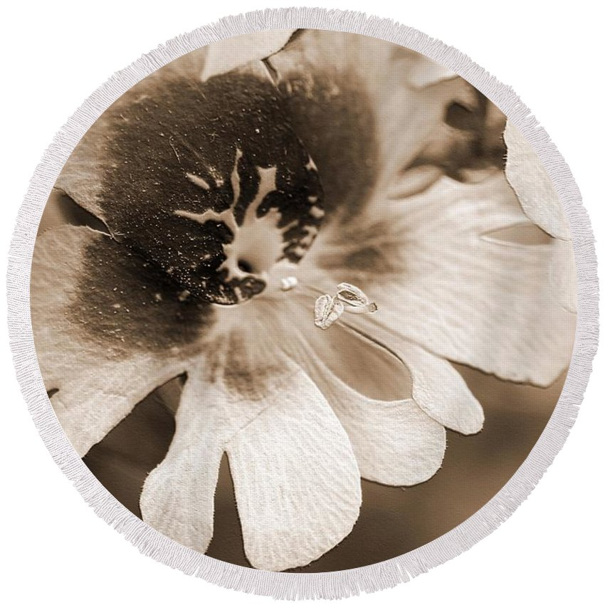 Mccombie Round Beach Towel featuring the photograph Schizanthus From The Hit Parade Mix by J McCombie