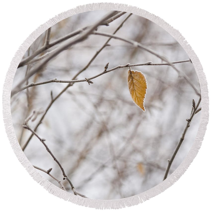 Pacific Northwest Round Beach Towel featuring the photograph Autumn Leaf by Jim Corwin