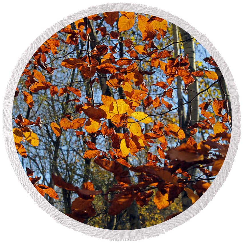 Autumn Leaves Round Beach Towel featuring the photograph Autumn Leaves by Tony Murtagh