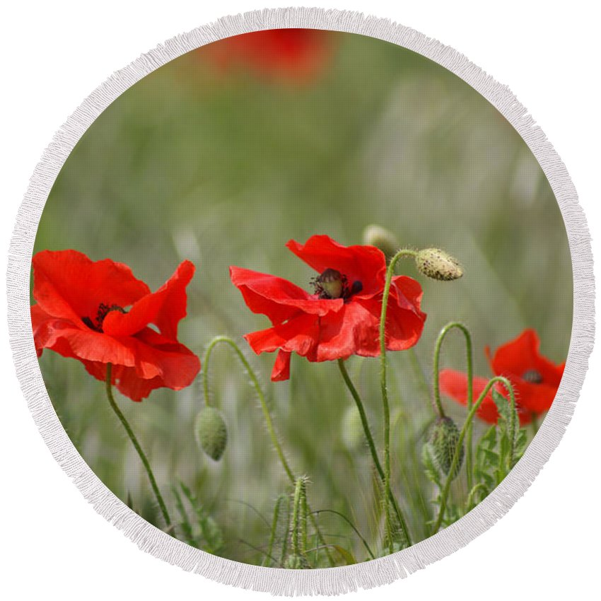 Poppies Round Beach Towel featuring the photograph Beautiful Poppies 1 by Carol Lynch