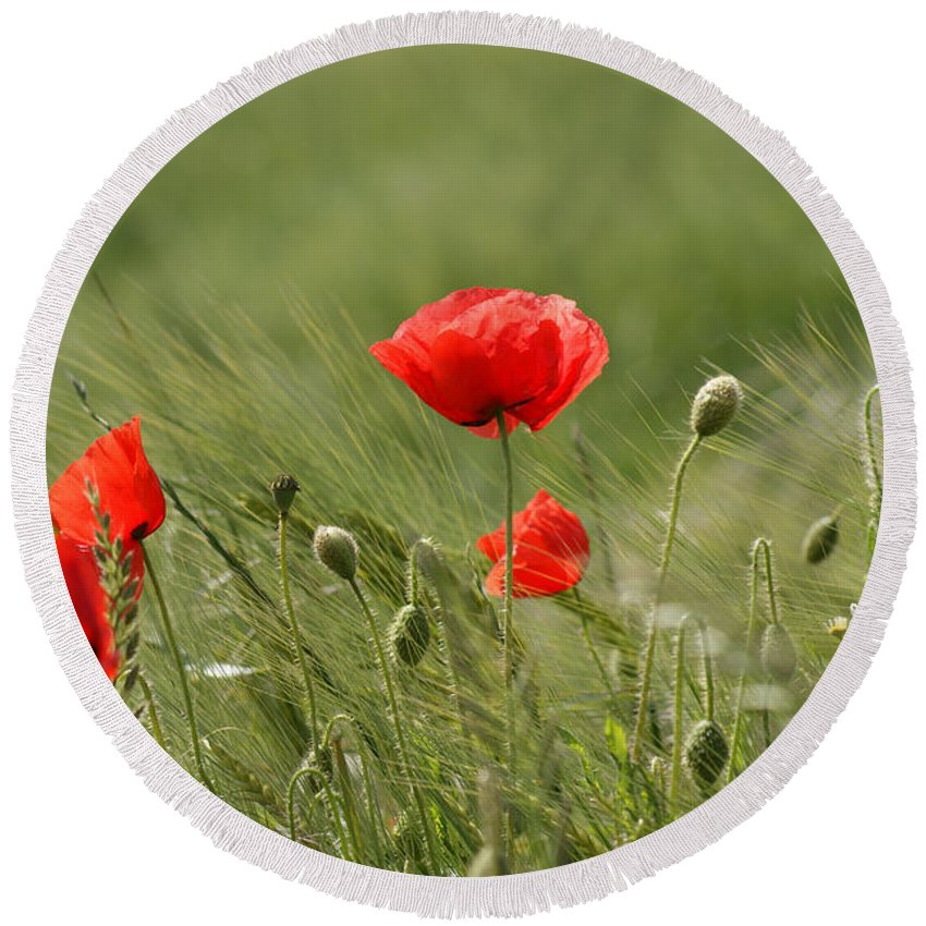 Poppies Round Beach Towel featuring the photograph Beautiful Poppies 4 by Carol Lynch