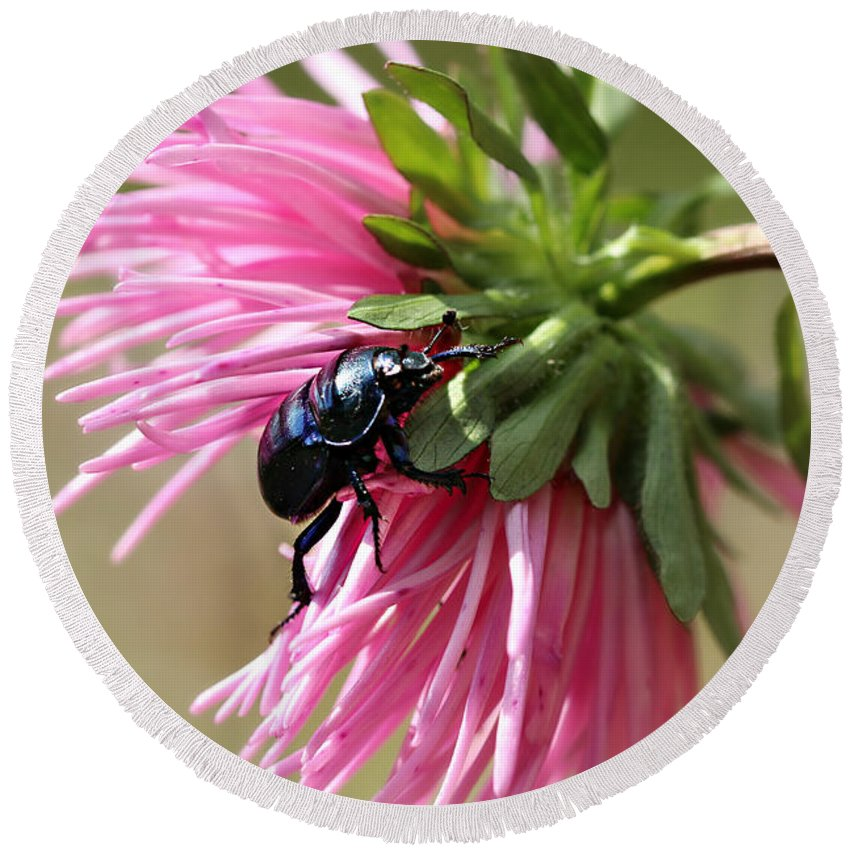 Flora Round Beach Towel featuring the photograph Beetle by Heike Hultsch