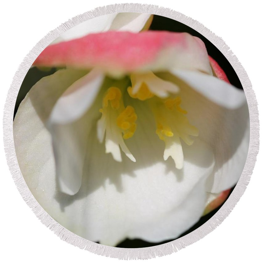 Begonia Round Beach Towel featuring the photograph Begonia Named Nonstop Apple Blossom by J McCombie