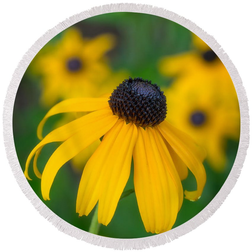 Blackeyed Susan Round Beach Towel featuring the photograph Blackeyed Susan by David Kay