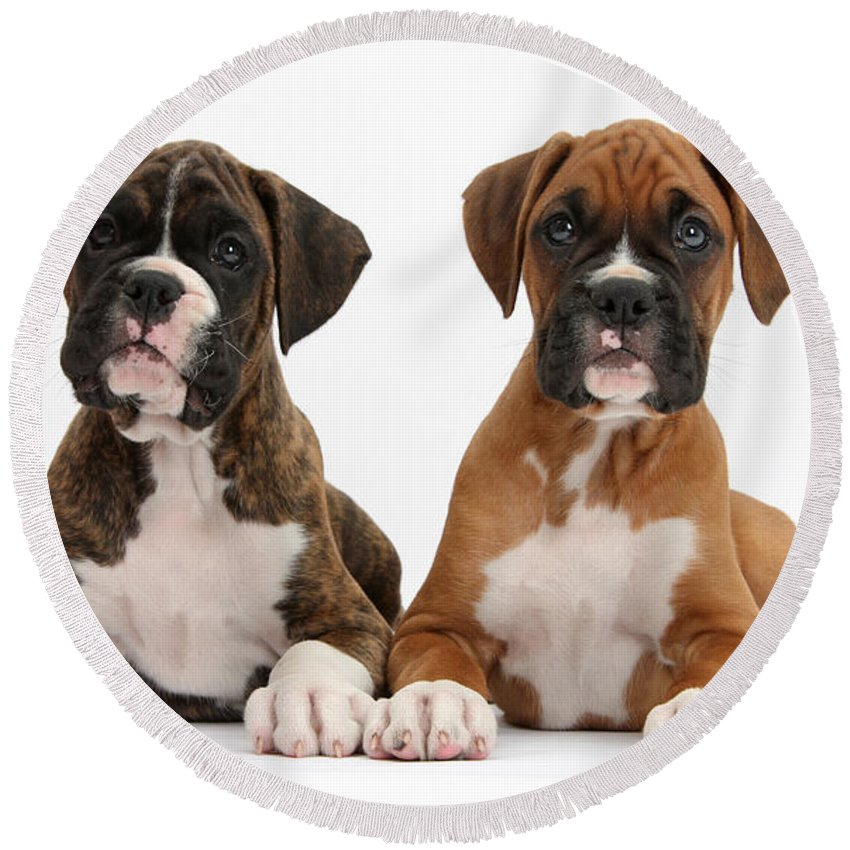 Nature Round Beach Towel featuring the photograph Boxer Puppies by Mark Taylor