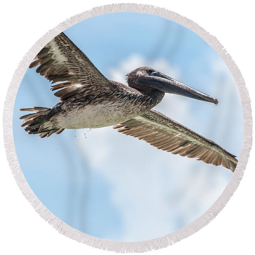 Pelican Round Beach Towel featuring the photograph Brown Pelican by Amel Dizdarevic