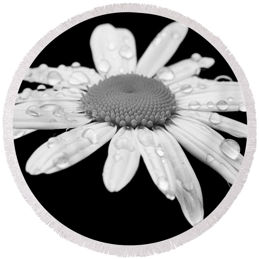 Bloom Round Beach Towel featuring the photograph Daisy by Paul Fell