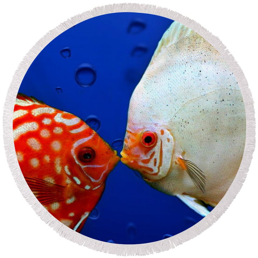 Fish Round Beach Towel featuring the photograph Discus Fish by Heike Hultsch