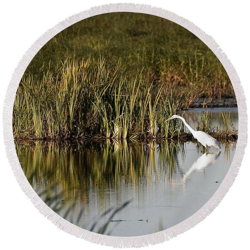Birds Round Beach Towel featuring the photograph Egret by Steven Ralser
