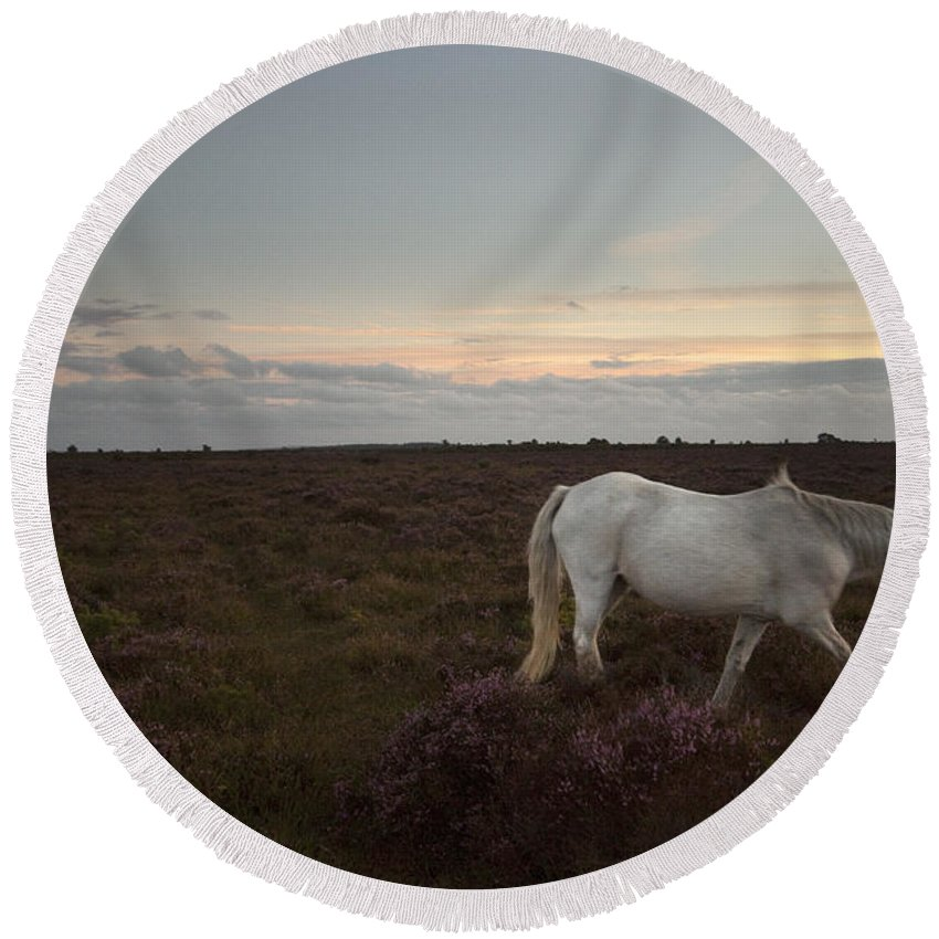 New Forest Round Beach Towel featuring the photograph Evening In New Forest by Angel Ciesniarska