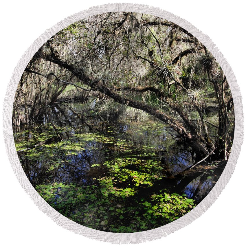 Beautiful Round Beach Towel featuring the photograph Buttonwood Swamp by Rudy Umans