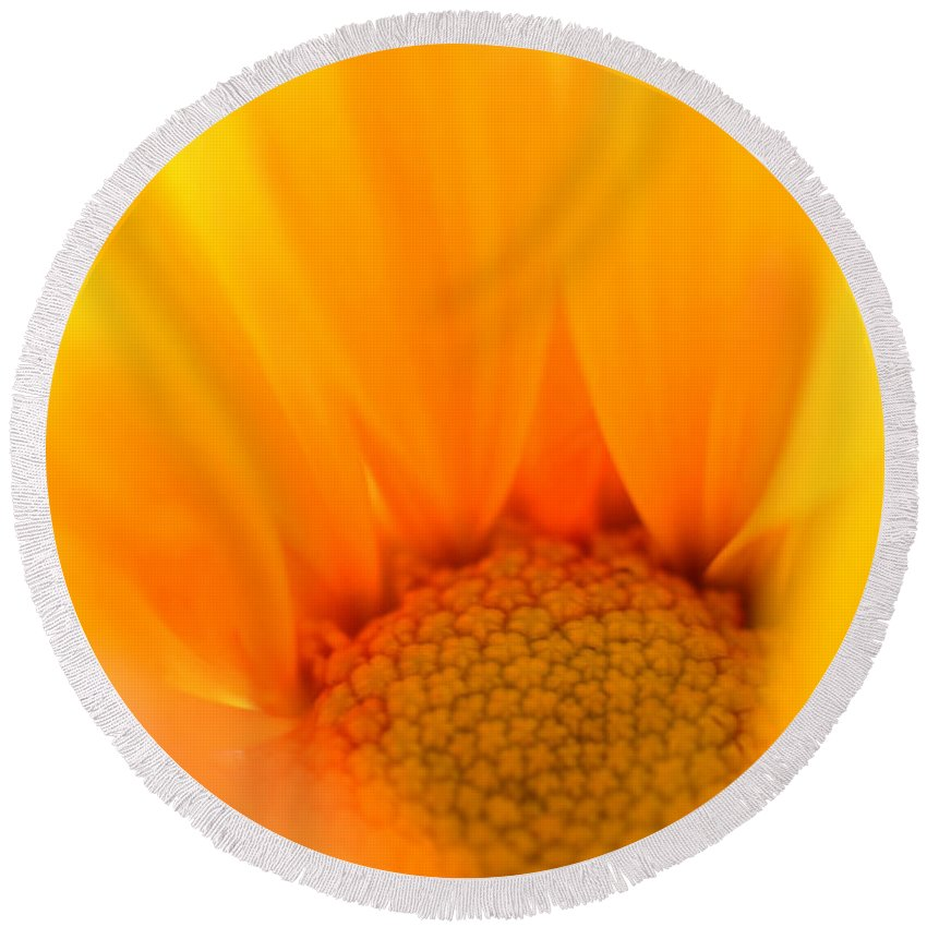 Daisy Round Beach Towel featuring the photograph Flaming Petals by Deb Halloran