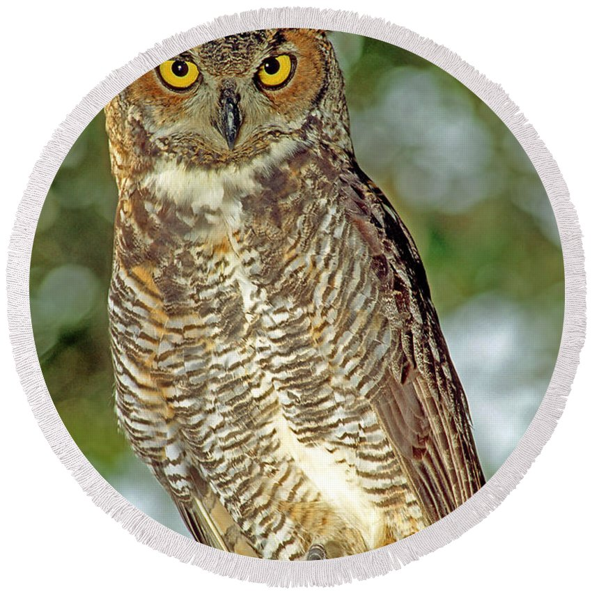 Animal Round Beach Towel featuring the photograph Great Horned Owl by Millard H. Sharp