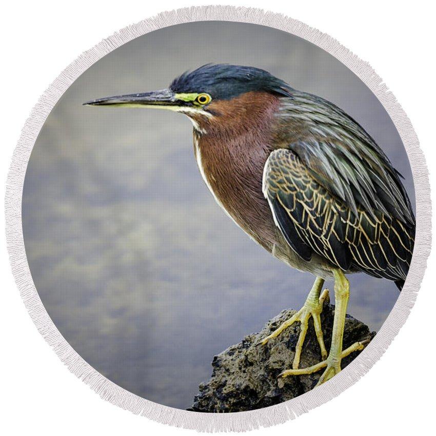 Bird Round Beach Towel featuring the photograph Green Heron by Fran Gallogly