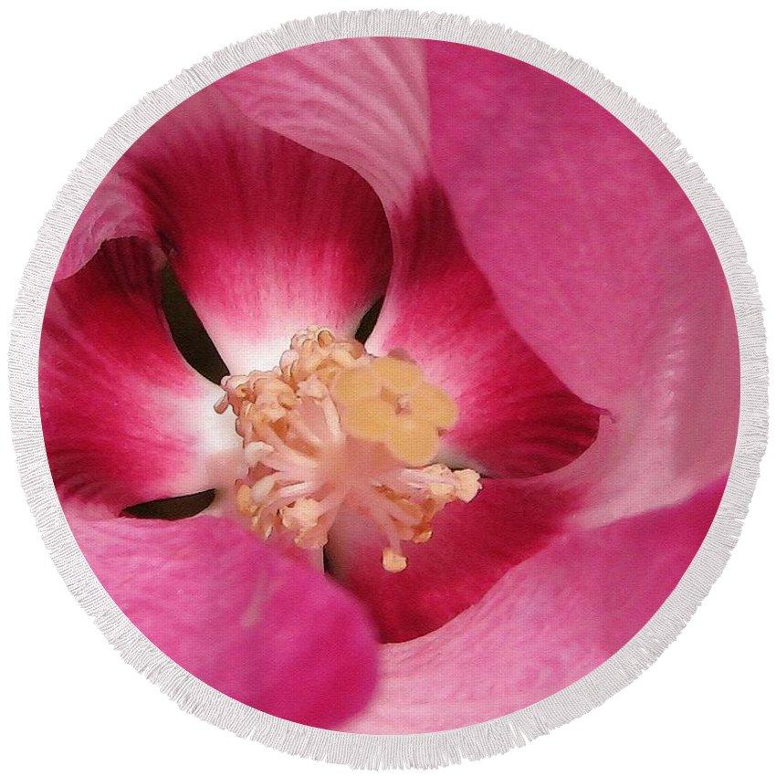 Hibiscus Moscheutos Round Beach Towel featuring the painting Hibiscus Moscheutos Named Luna Pink Swirl by J McCombie