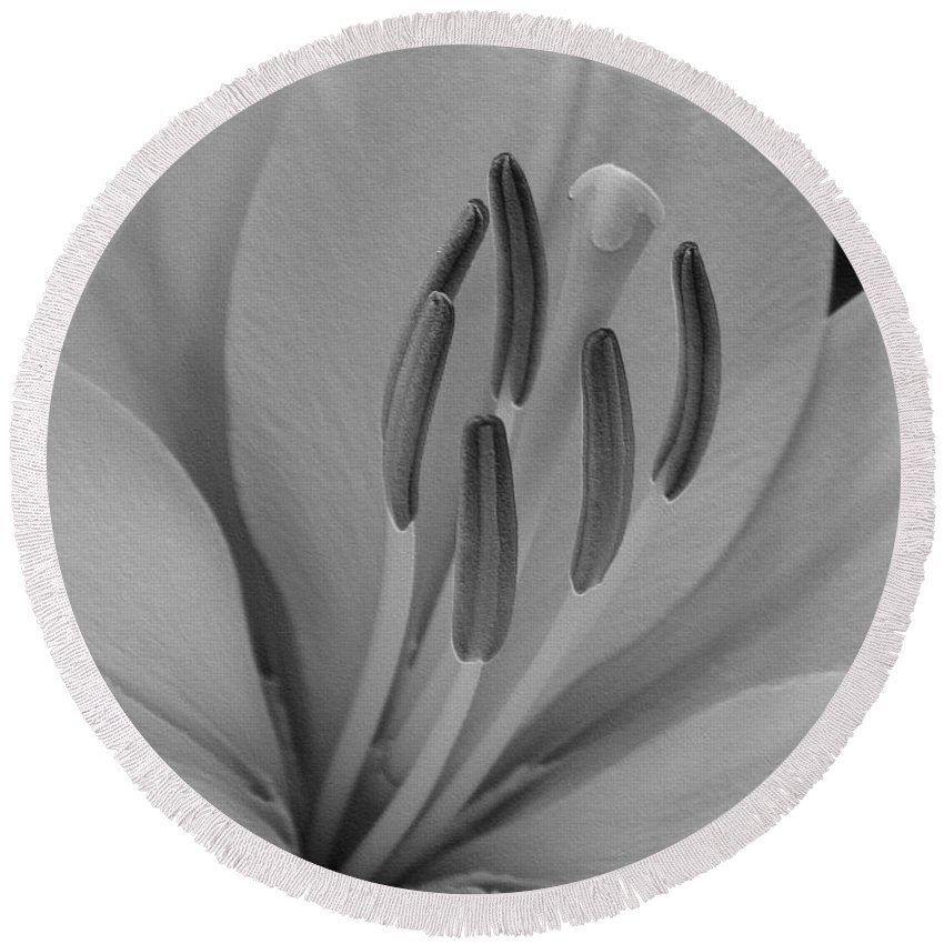 Hybrid Lily Round Beach Towel featuring the digital art Hybrid Lily Named Trebbiano by J McCombie