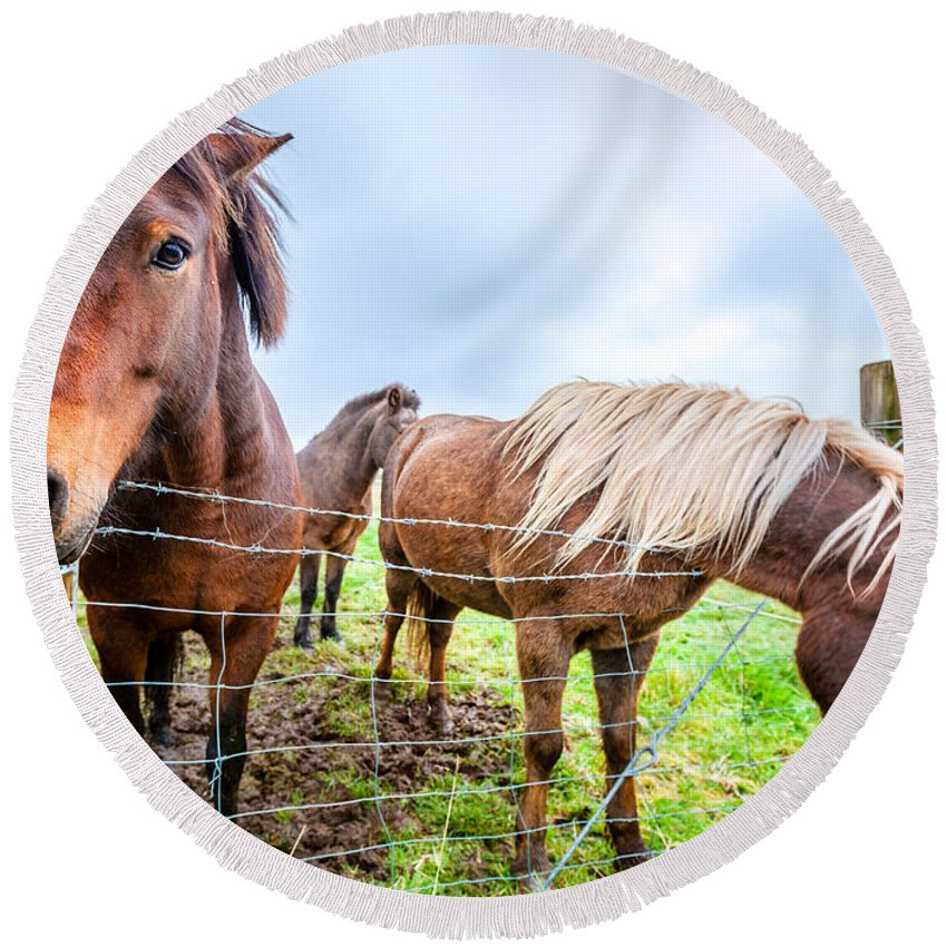 Europe Round Beach Towel featuring the photograph Icelandic Ponies by Alexey Stiop