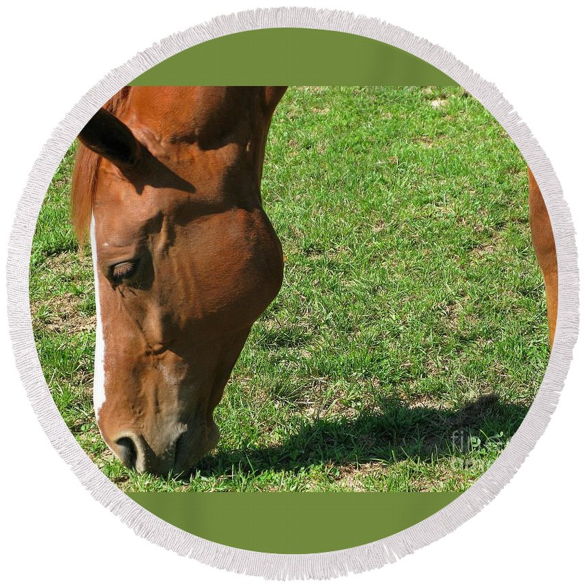 Horse Round Beach Towel featuring the photograph In Green Pasture by Ann Horn
