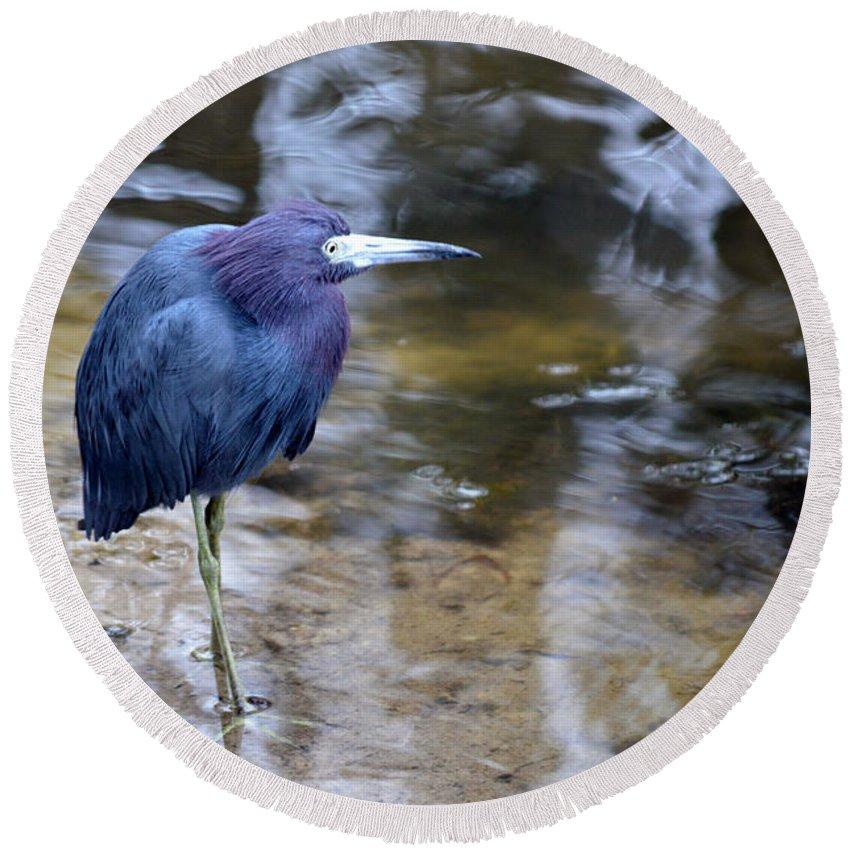 Little Blue Heron Round Beach Towel featuring the photograph Little Blue Heron by Linda Kerkau