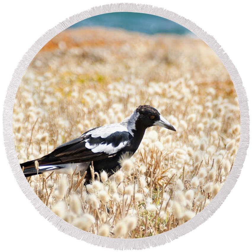 South Australia Round Beach Towel featuring the photograph Magpie by Tim Hester