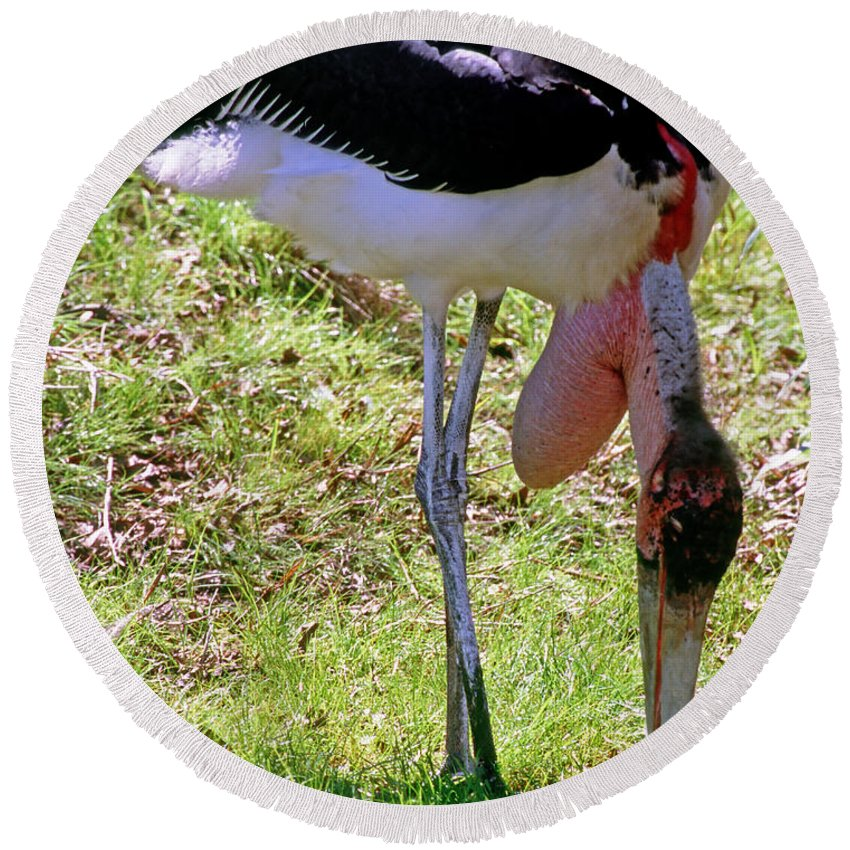 Animal Round Beach Towel featuring the photograph Marabou Stork by Millard H. Sharp