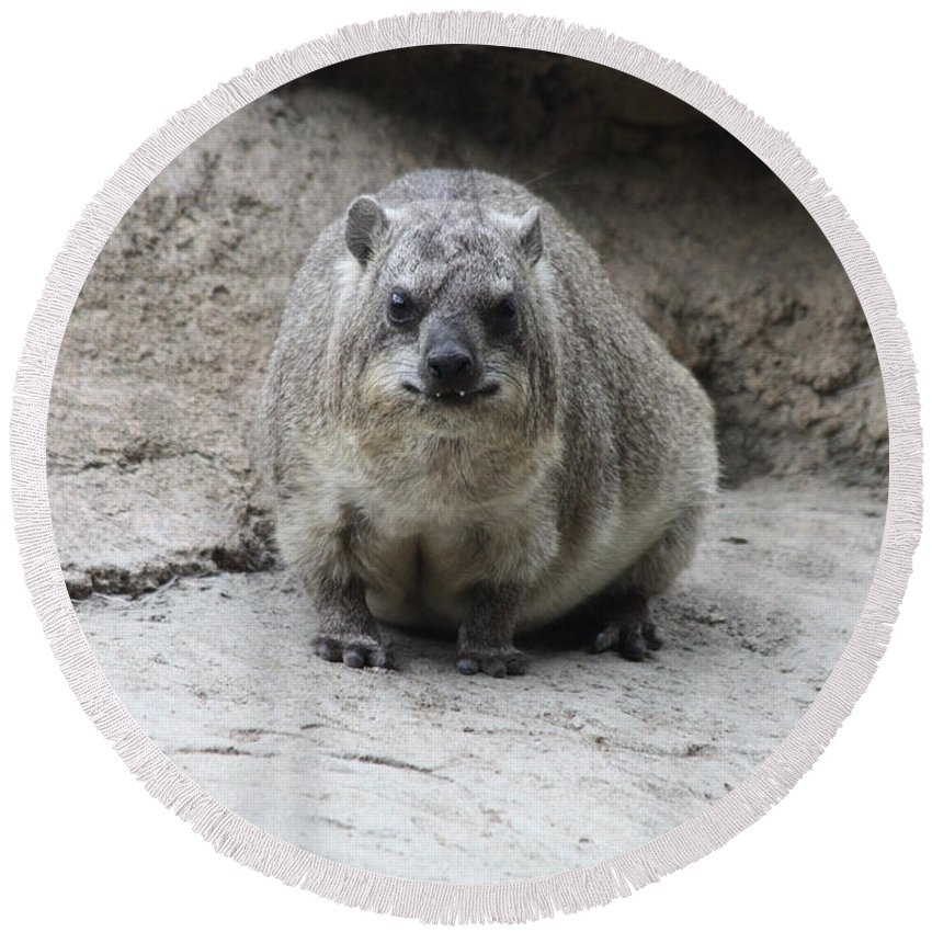 Rock Hydax Headshot Round Beach Towel featuring the photograph Rock Hyrax Headshot by John Telfer