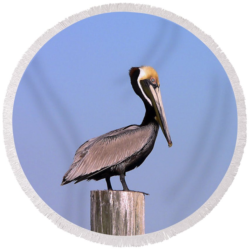 Pelican Round Beach Towel featuring the photograph Pelican Perch by Al Powell Photography USA