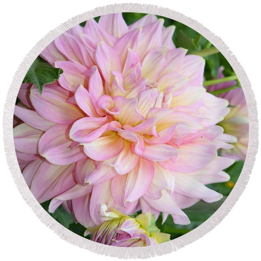 Dahlia Round Beach Towel featuring the photograph Pink Pleasure by Christiane Schulze Art And Photography