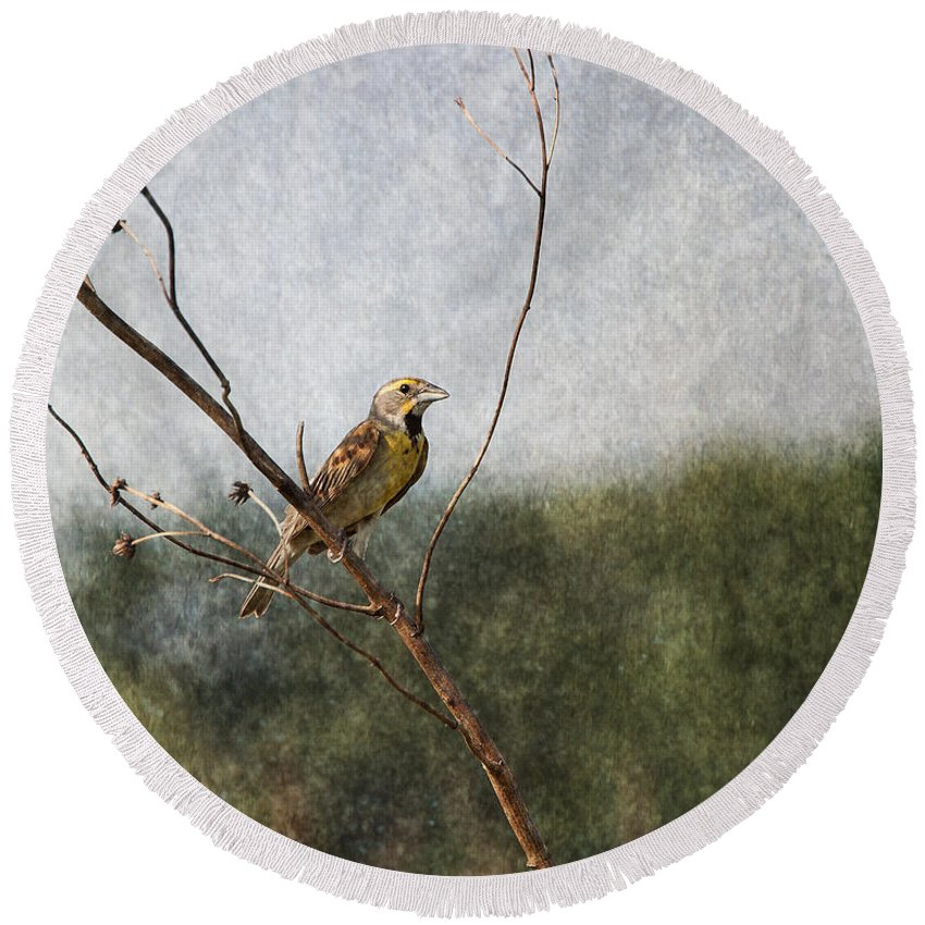 Dickcissel Round Beach Towel featuring the photograph Poised by Dale Kincaid