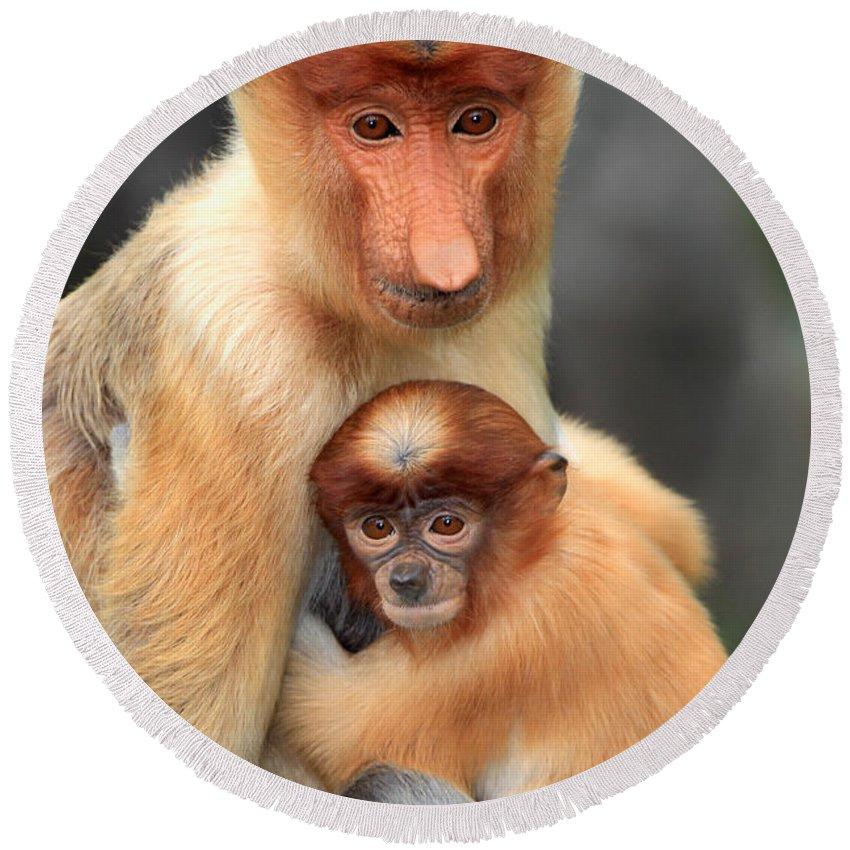 Proboscis Monkey Round Beach Towels