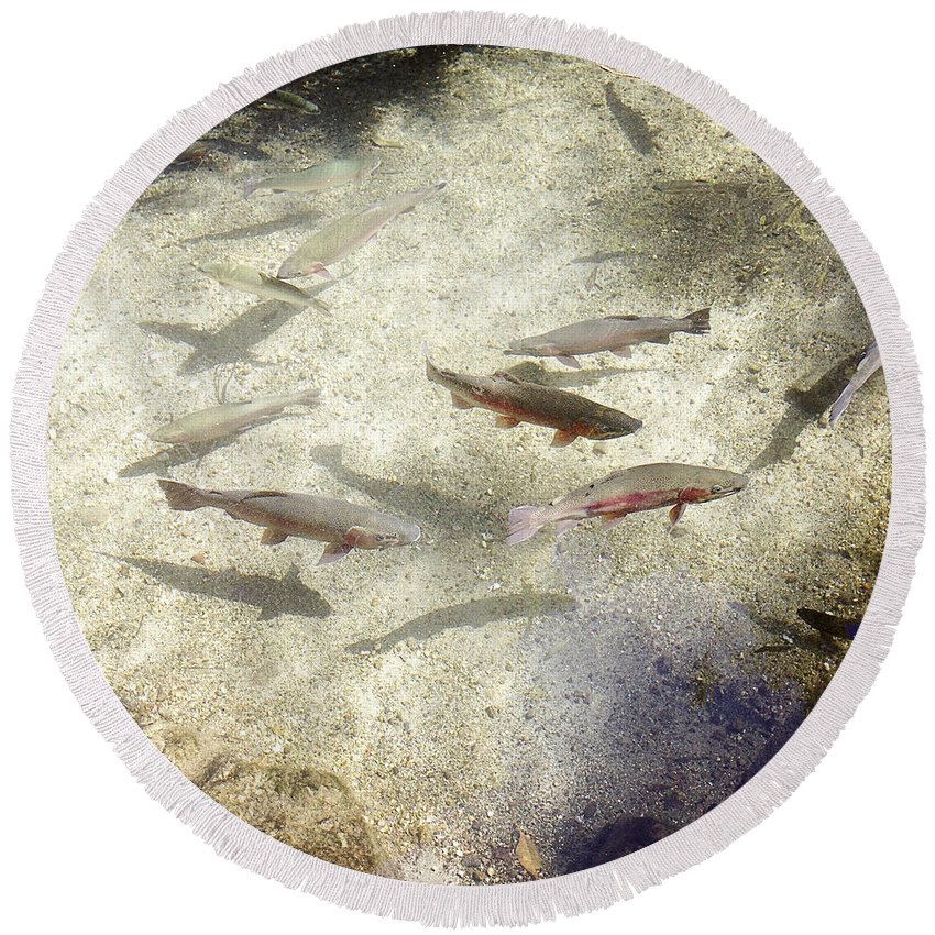 Water Round Beach Towel featuring the photograph Rainbow Trout by Les Cunliffe