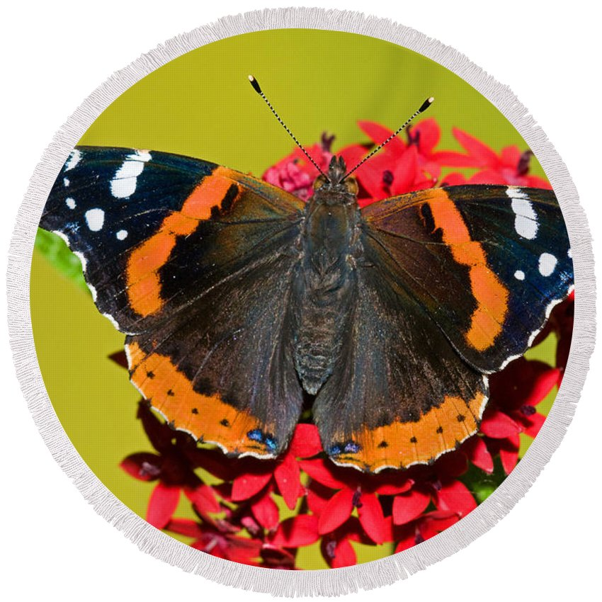 Animal Round Beach Towel featuring the photograph Red Admiral Butterfly by Millard H. Sharp