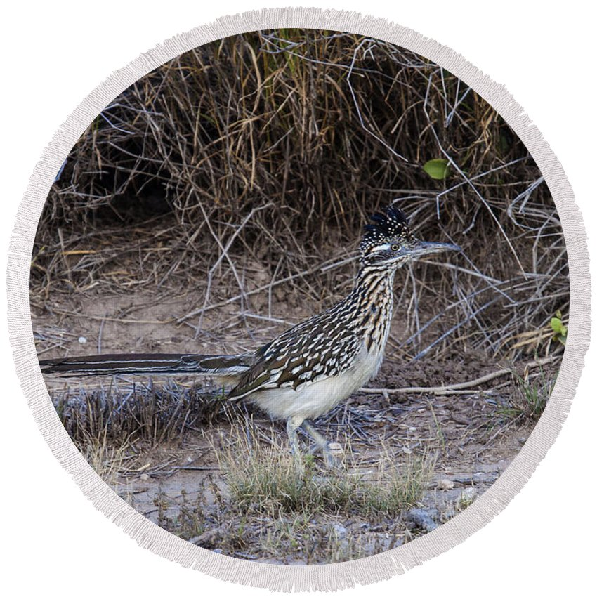 Doug Lloyd Round Beach Towel featuring the photograph Roadrunner by Doug Lloyd