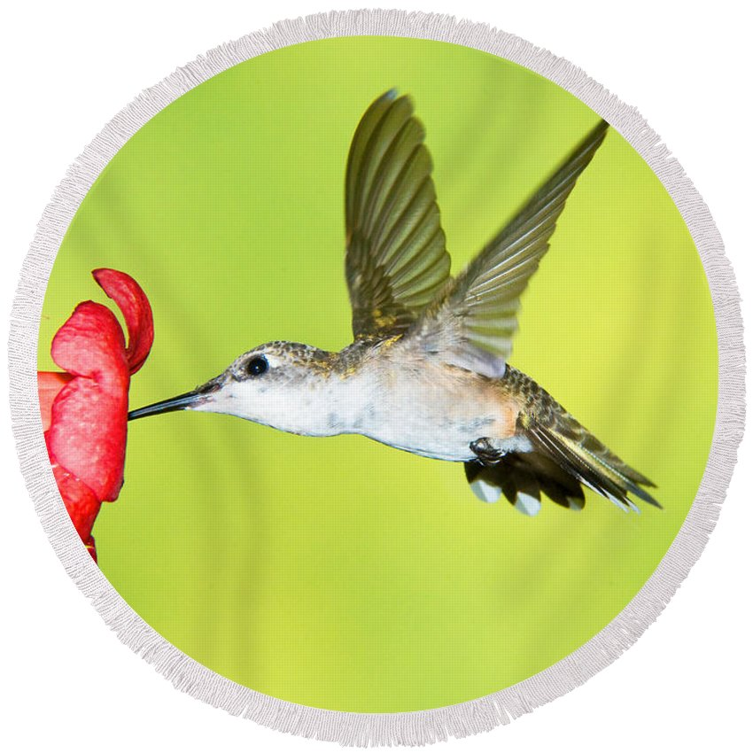 Nature Round Beach Towel featuring the photograph Ruby Throated Hummingbird by Millard H. Sharp
