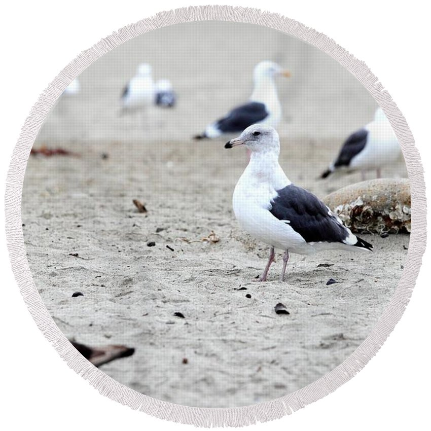 Animal Round Beach Towel featuring the photograph Seagull by Henrik Lehnerer