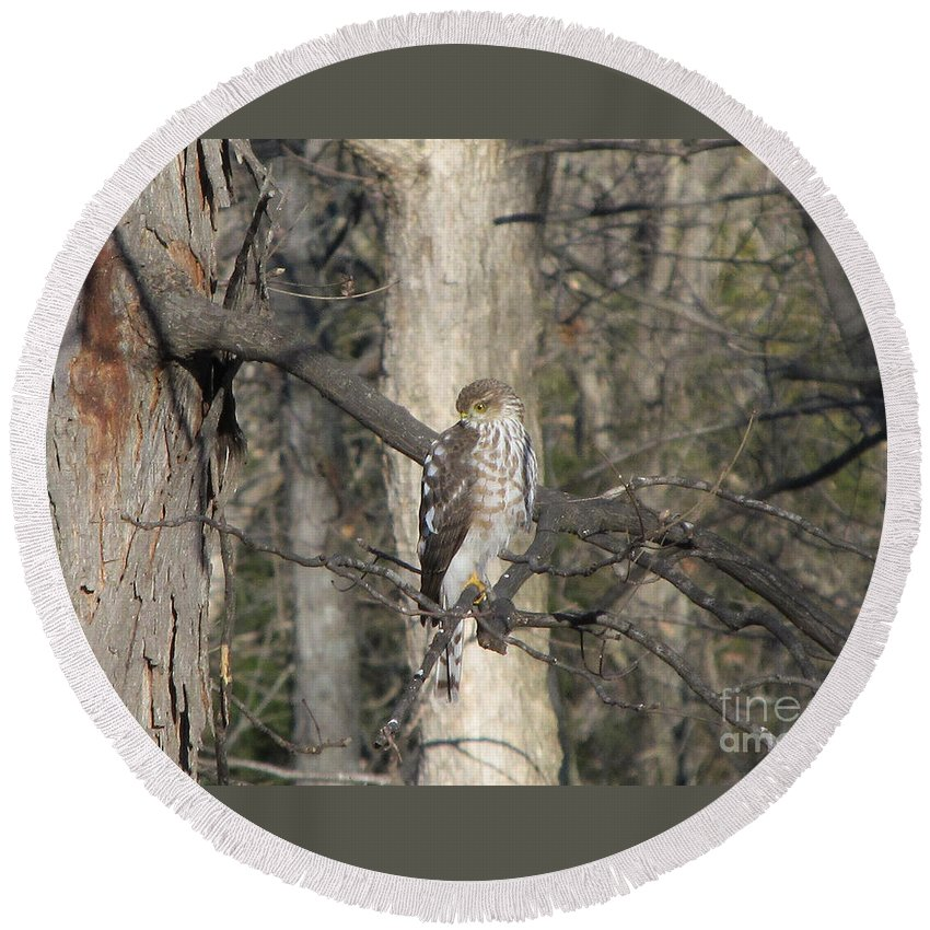 Bird Round Beach Towel featuring the photograph Sharp-shinned Hawk by Jamie Smith