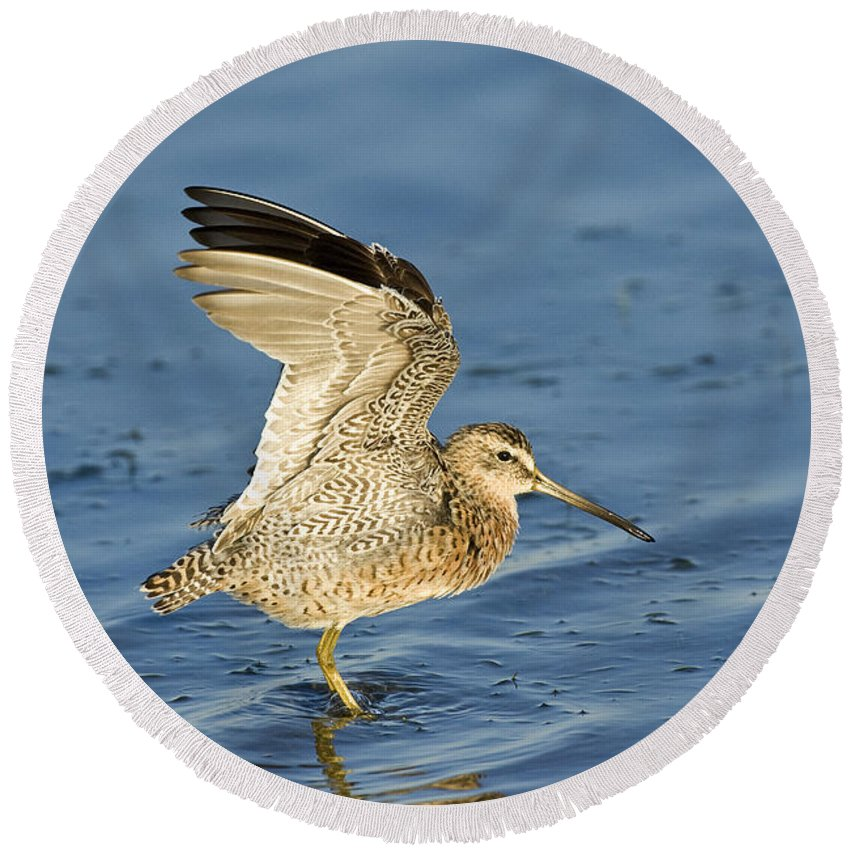 Animal Round Beach Towel featuring the photograph Short-billed Dowitcher by Anthony Mercieca