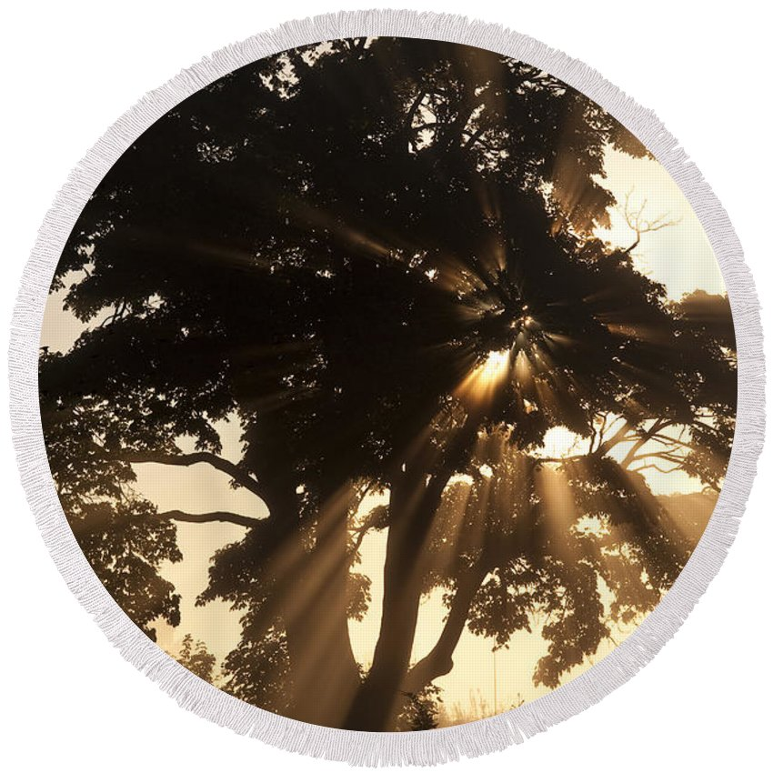 Beautiful Round Beach Towel featuring the photograph Silhouetted Tree With Sun Rays by Jim Corwin