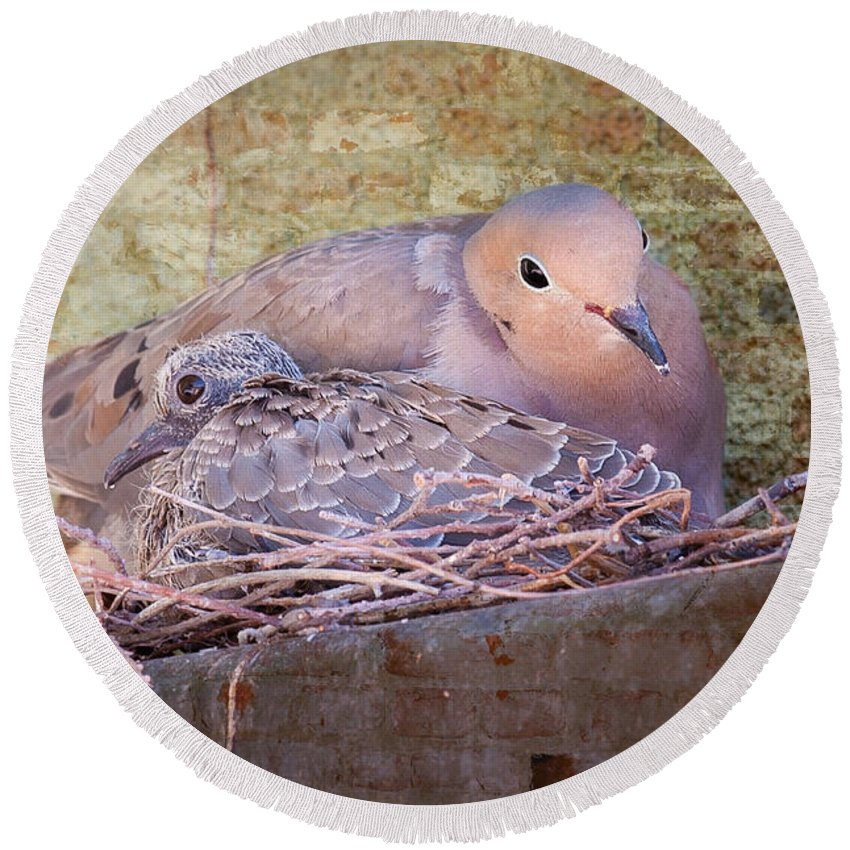 Birds Round Beach Towel featuring the photograph Small Family by Jim Thompson