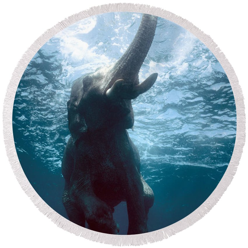 Swim Round Beach Towel featuring the photograph Swimming Elephant by Olivier Blaise