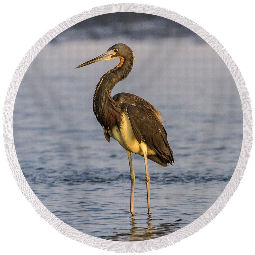 Doug Lloyd Round Beach Towel featuring the photograph Tricolored Heron by Doug Lloyd
