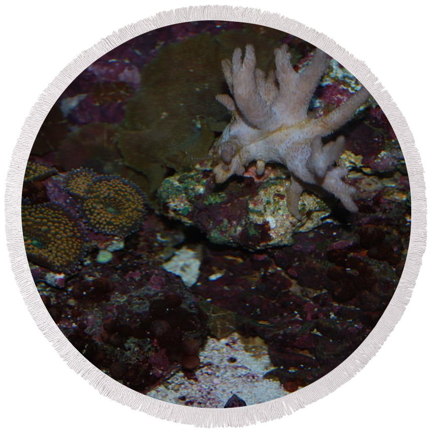 Taken Through Side Of Aquarium Round Beach Towel featuring the photograph Tropical Coral by Robert Floyd