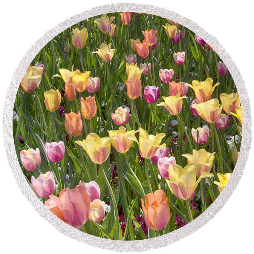 Tulips Round Beach Towel featuring the photograph Tulips At Dallas Arboretum V92 by Douglas Barnard