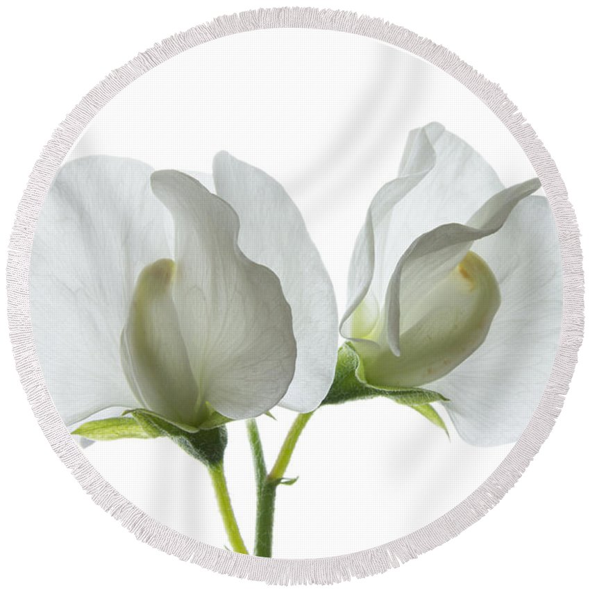 Sweet Pea Round Beach Towel featuring the photograph Two White Sweet Peas by Ann Garrett