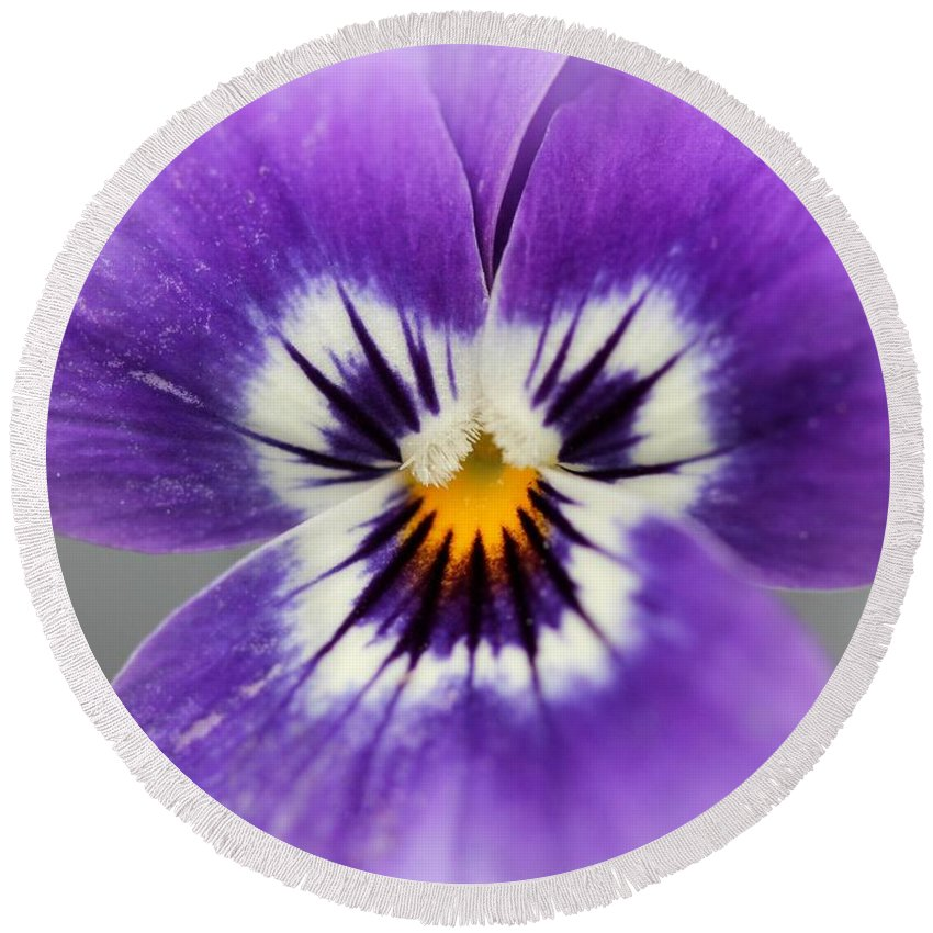 Mccombie Round Beach Towel featuring the photograph Viola Named Sorbet Marina Baby Face by J McCombie