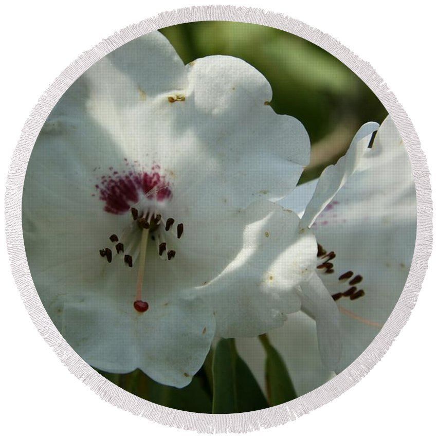 Rhododendron Round Beach Towel featuring the photograph White Rhododendron Blossom by Christiane Schulze Art And Photography